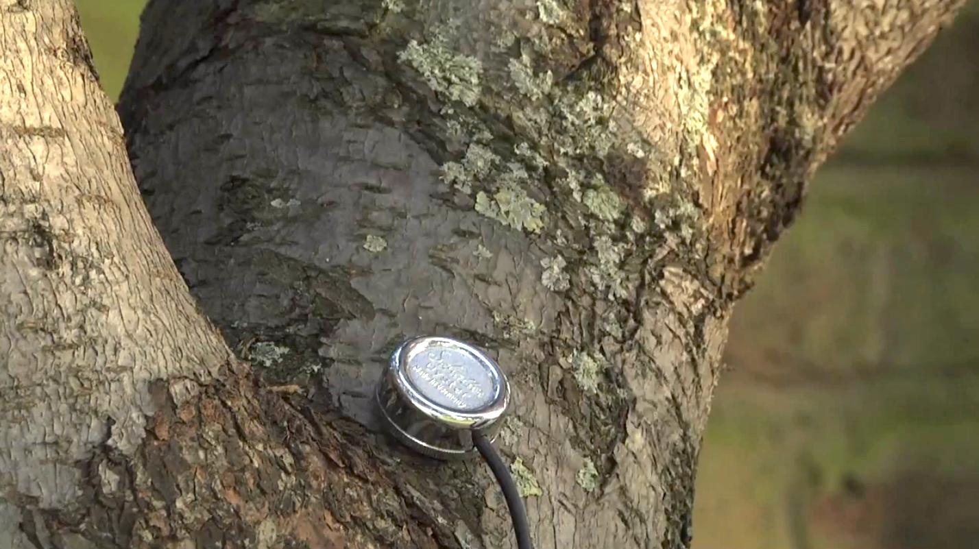 Mogees sur un arbre!